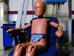 The Ford Motor Company and the Society of Automotive Engineers (SAE) will embark this fall on an international study of a more lifelike, prototype abdominal insert for pediatric crash-test dummies.
