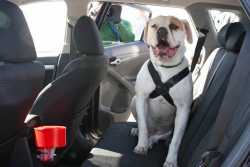 Bark Buckle Up dog harness