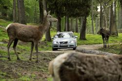 Northern Exposure: Car vs. Moose volvo health and safety auto articles auto tech