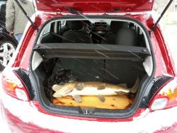 2014 Mitsubishi Mirage cargo area with 20lb pike on a board